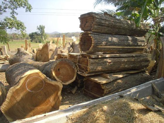 Acacia tree sawn for slabs
